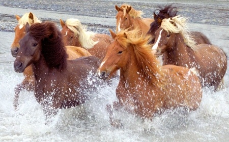 Office News Spring 2014 – Year of the Horse