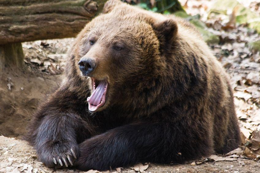 GMO Labeling…Don't Poke The Bear
